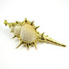 Wholesale Shell Pendant,Natural Cabrits Murex Pendant, Gold wrapped Shell Pendant
